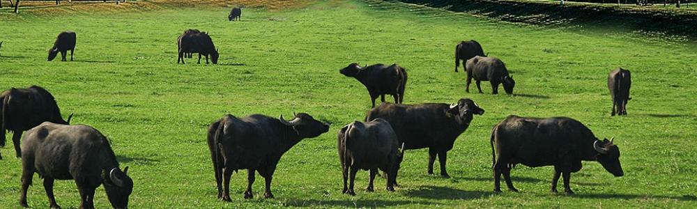 Storia di una bufala